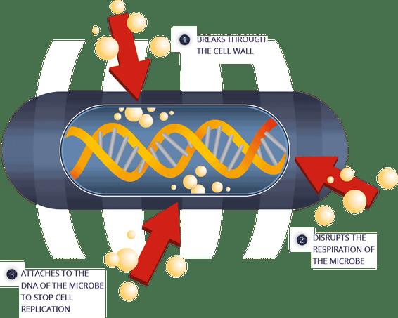 how does ozone kill the covid 19 virus